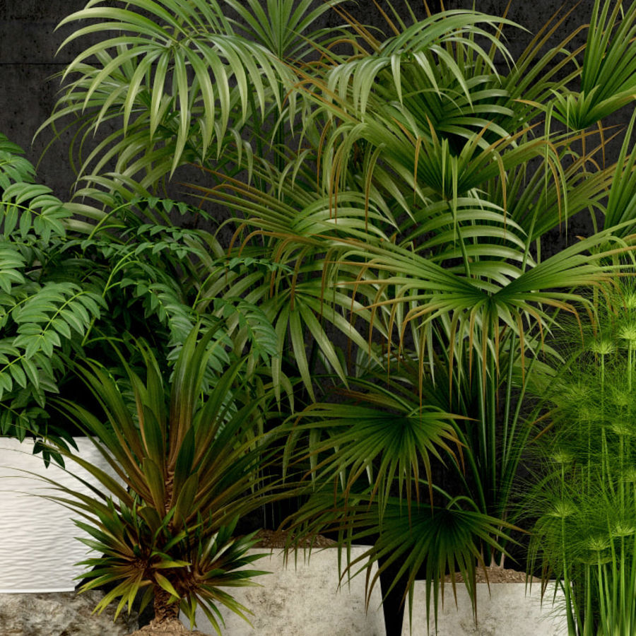 Plants collection 53 royalty-free 3d model - Preview no. 5