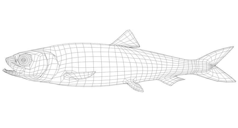 大西洋鲱鱼 royalty-free 3d model - Preview no. 9