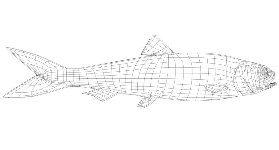 大西洋鲱鱼 royalty-free 3d model - Preview no. 10