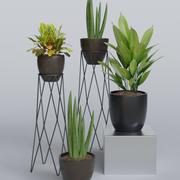 Внутренние Растения 4 в 1 3d model