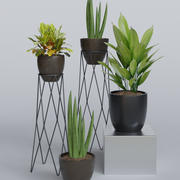 Rośliny wewnętrzne 4 w 1 3d model