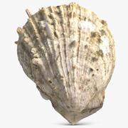 Sea Shell 21 3d model