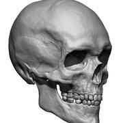 Mänsklig skalle 3d model
