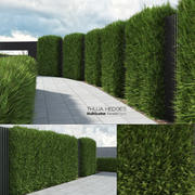 Thuja Hedges (ForestPack+MultiScatter) 3d model