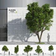 Eleven Trees 3 3d model