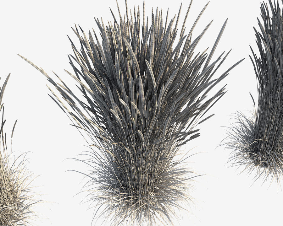 Reed Grass (Calamagrostis) royalty-free 3d model - Preview no. 8