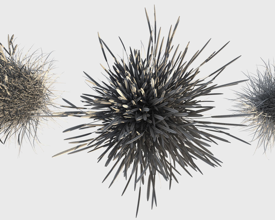 Calamagrostis Grass (+GrowFX) royalty-free 3d model - Preview no. 1