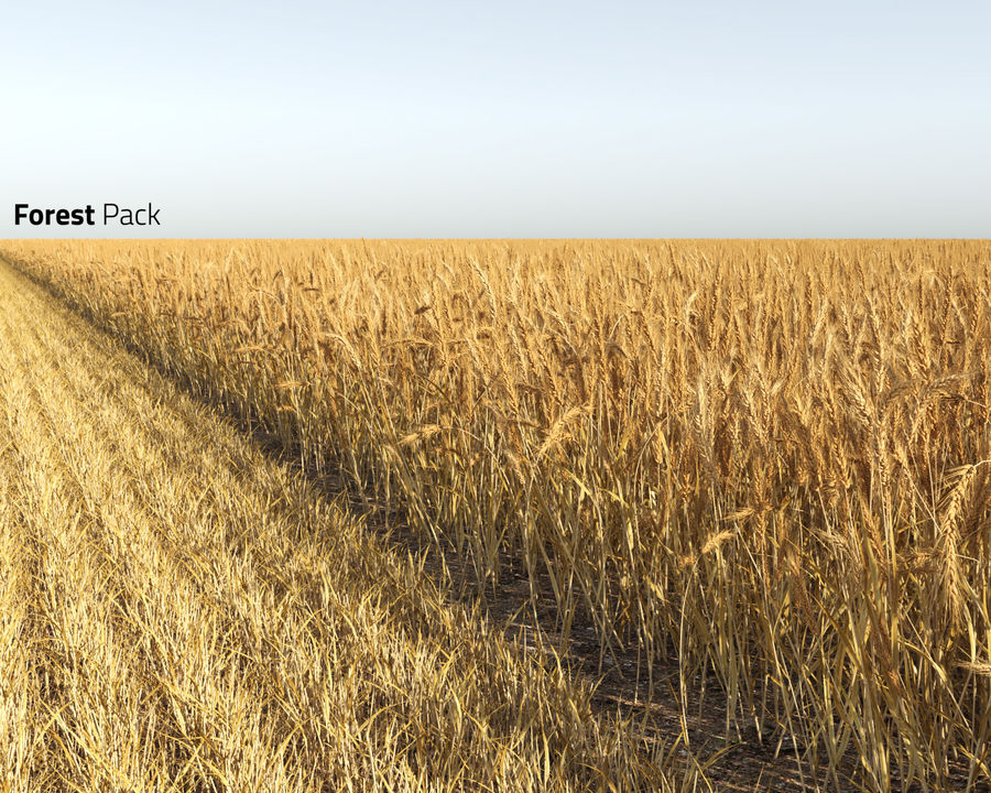 Wheat Field (+GrowFX) royalty-free 3d model - Preview no. 2