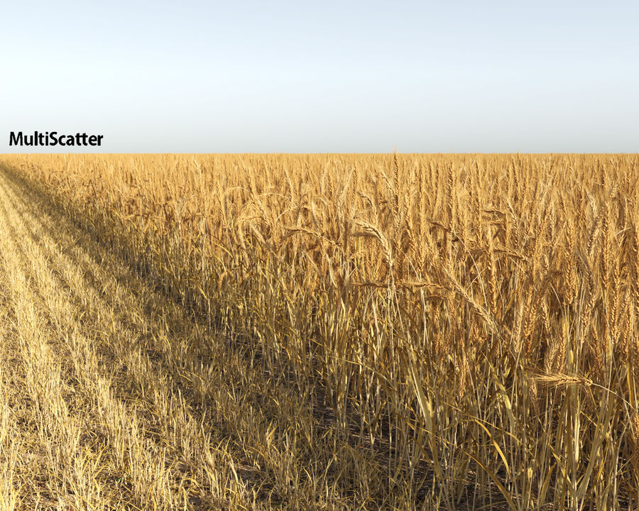 Wheat Field (+GrowFX) royalty-free 3d model - Preview no. 3
