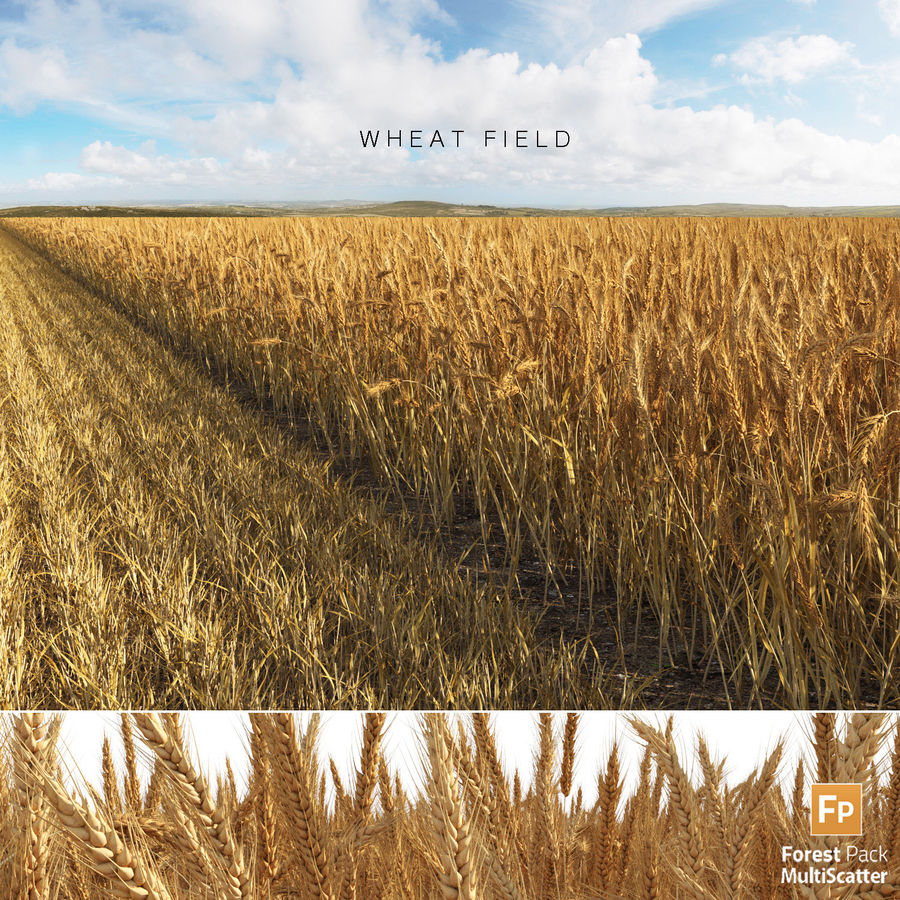 Wheat Field (+GrowFX) royalty-free 3d model - Preview no. 1