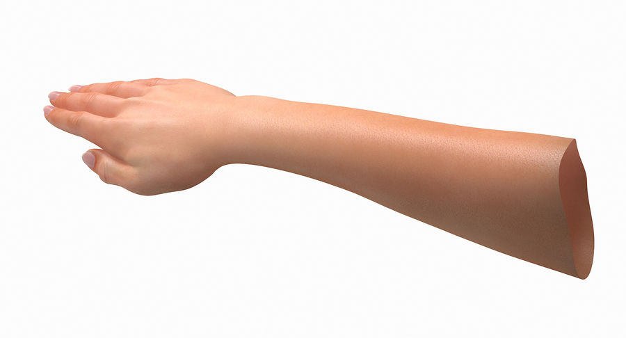 Female Arm A (Pose C Textured) royalty-free 3d model - Preview no. 10