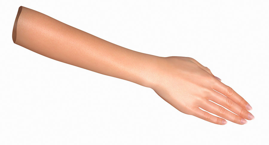 Female Arm A (Pose C Textured) royalty-free 3d model - Preview no. 14