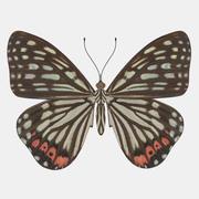 Schmetterling 3d model