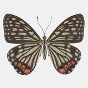 Schmetterling 3d model