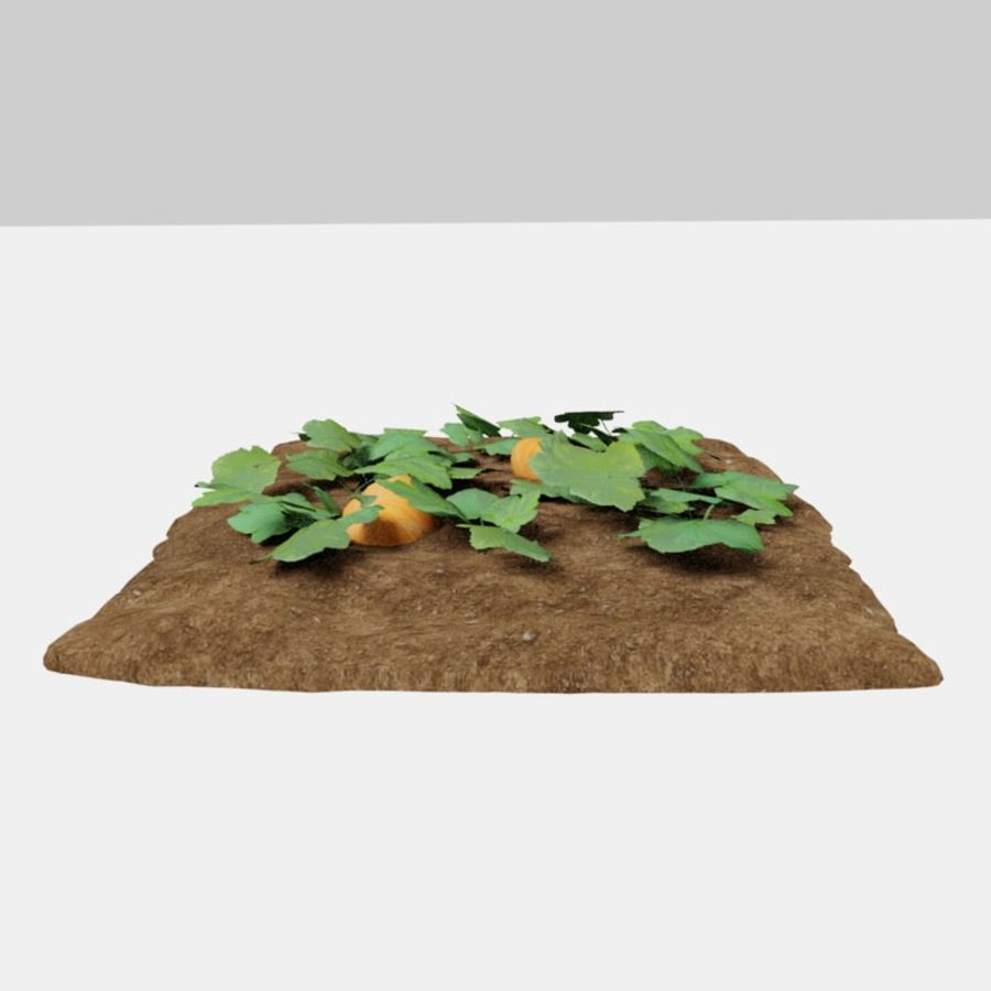 Pumpkin 3 growth stages royalty-free 3d model - Preview no. 3