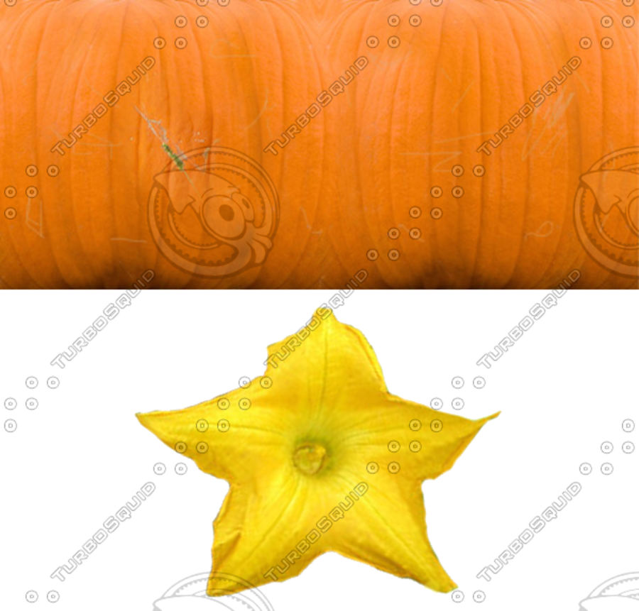 Pumpkin 3 growth stages royalty-free 3d model - Preview no. 11