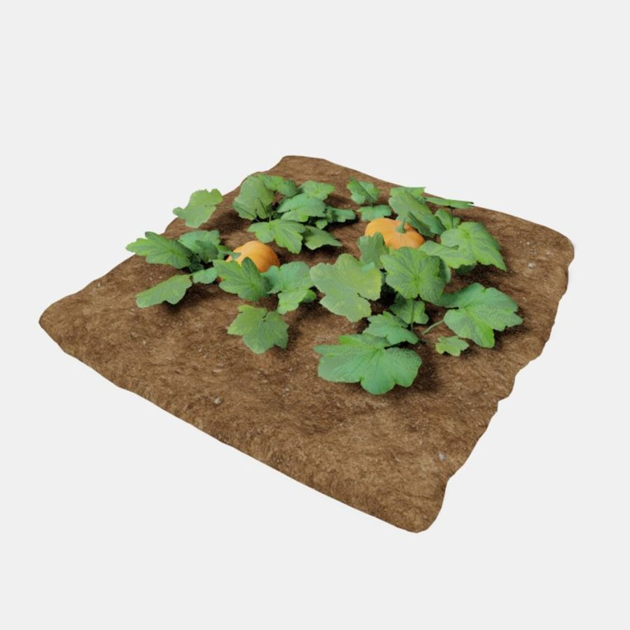 Pumpkin 3 growth stages royalty-free 3d model - Preview no. 1
