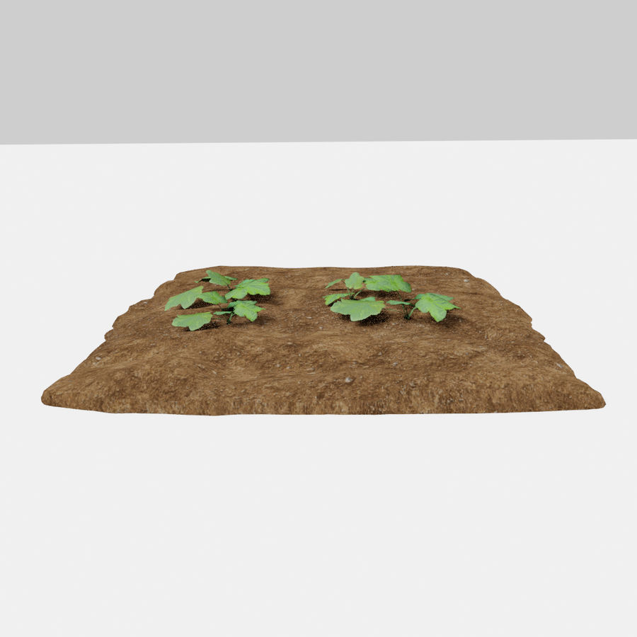 Pumpkin 3 growth stages royalty-free 3d model - Preview no. 6