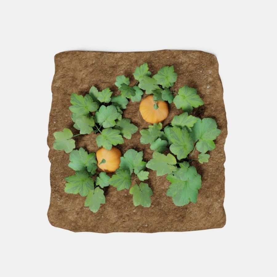 Pumpkin 3 growth stages royalty-free 3d model - Preview no. 2