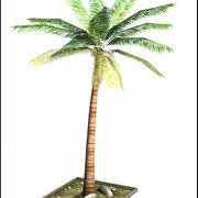 Jeune palmier 3d model