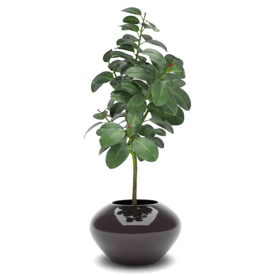 Plant Ficus royalty-free 3d model - Preview no. 4