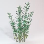 Goldenrod planten 3d model