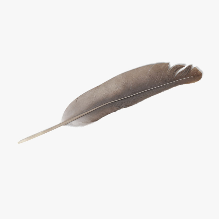 Feather royalty-free 3d model - Preview no. 1