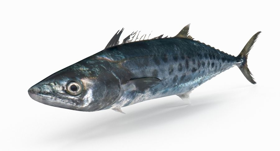 Queenfish royalty-free 3d model - Preview no. 2
