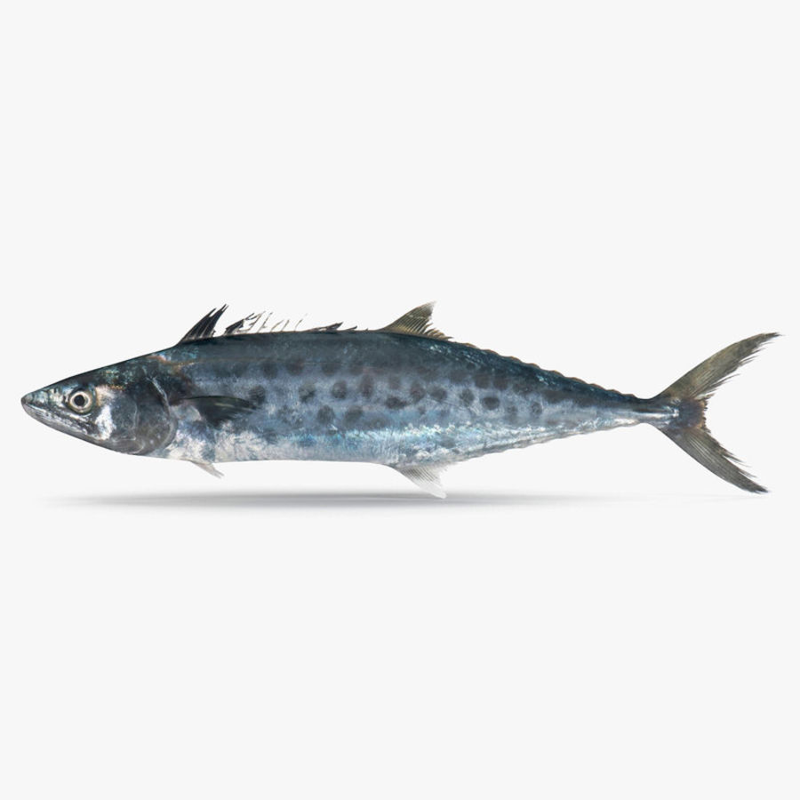 Queenfish royalty-free 3d model - Preview no. 1