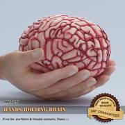Hands holding Brain 3d model