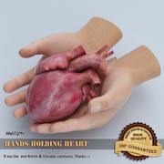 Hands holding Heart 3d model