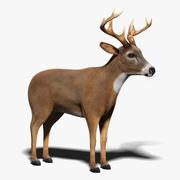 Hjortar (päls) 3d model
