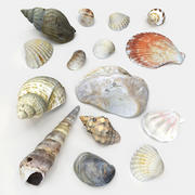 Seashell Collection 3d model