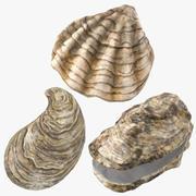 Oyster Shells 3d model