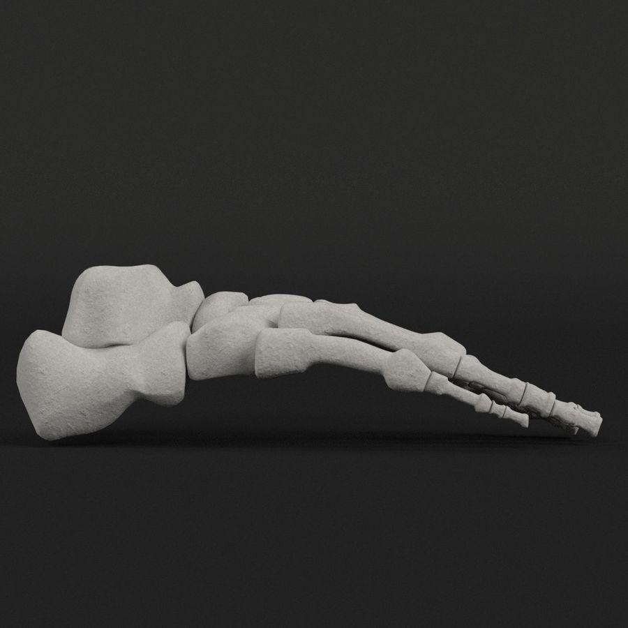 解剖学-人間の足の骨 royalty-free 3d model - Preview no. 4