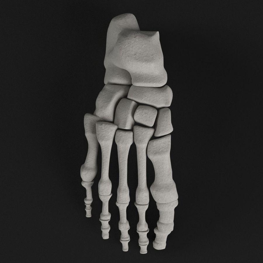 解剖学-人間の足の骨 royalty-free 3d model - Preview no. 6