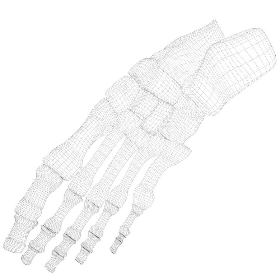 解剖学-人間の足の骨 royalty-free 3d model - Preview no. 8
