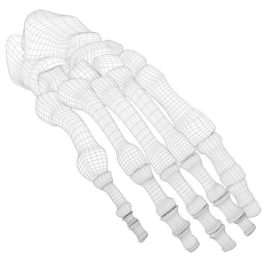 解剖学-人間の足の骨 royalty-free 3d model - Preview no. 7