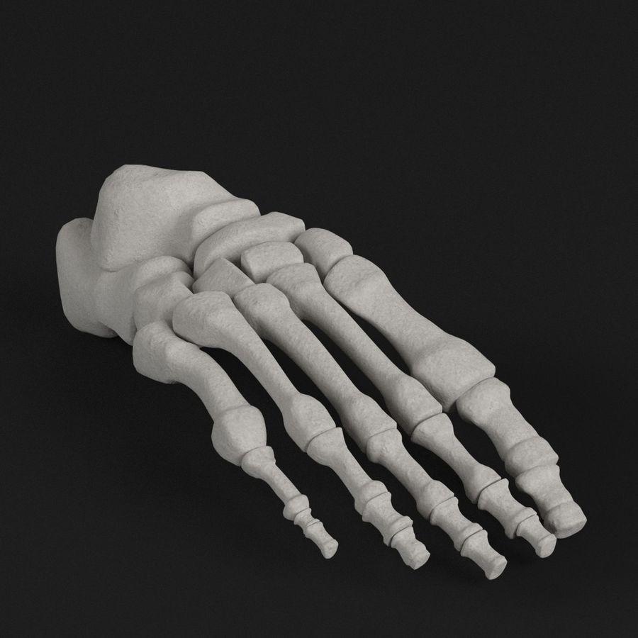 解剖学-人間の足の骨 royalty-free 3d model - Preview no. 1