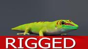Gecko 3DモデルRIGGED 3d model