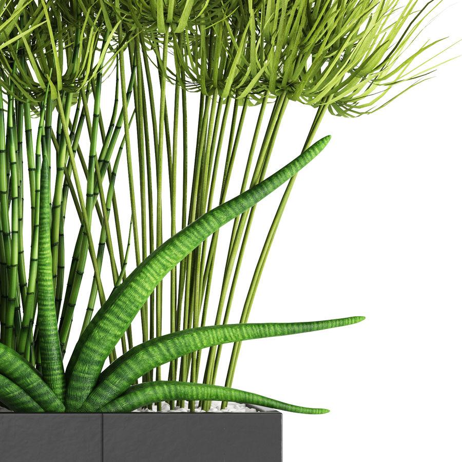 Rośliny tropikalne w doniczce royalty-free 3d model - Preview no. 6