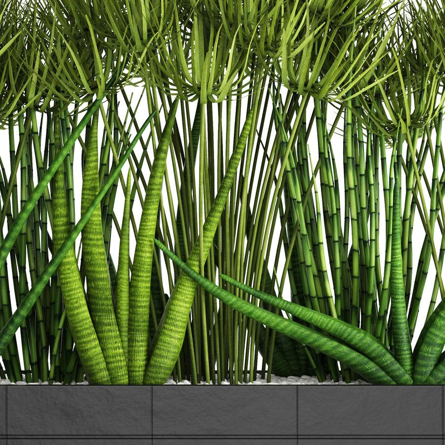Rośliny tropikalne w doniczce royalty-free 3d model - Preview no. 5
