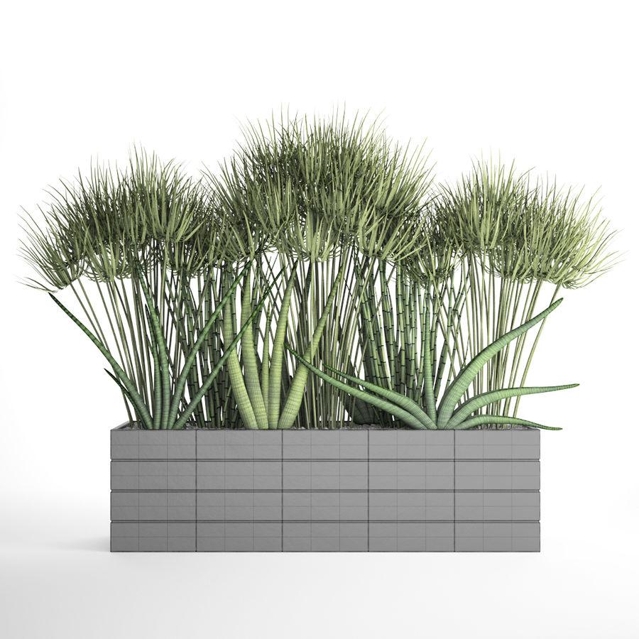 Rośliny tropikalne w doniczce royalty-free 3d model - Preview no. 9