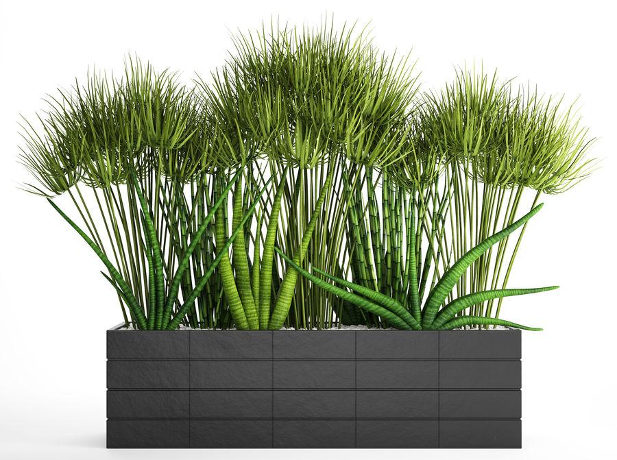 Rośliny tropikalne w doniczce royalty-free 3d model - Preview no. 2