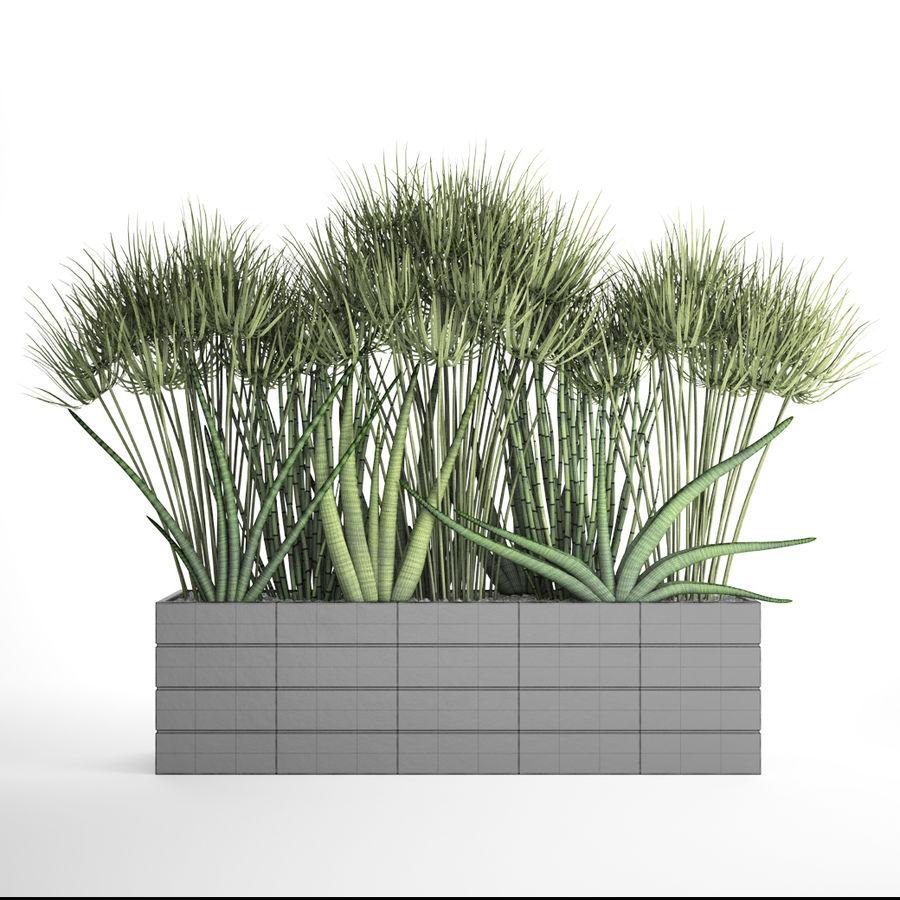 Rośliny tropikalne w doniczce royalty-free 3d model - Preview no. 7
