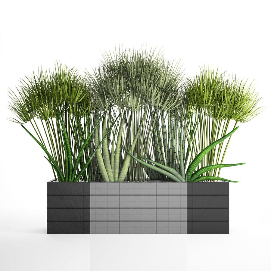 Rośliny tropikalne w doniczce royalty-free 3d model - Preview no. 8