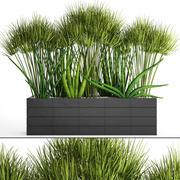 Rośliny tropikalne w doniczce 3d model