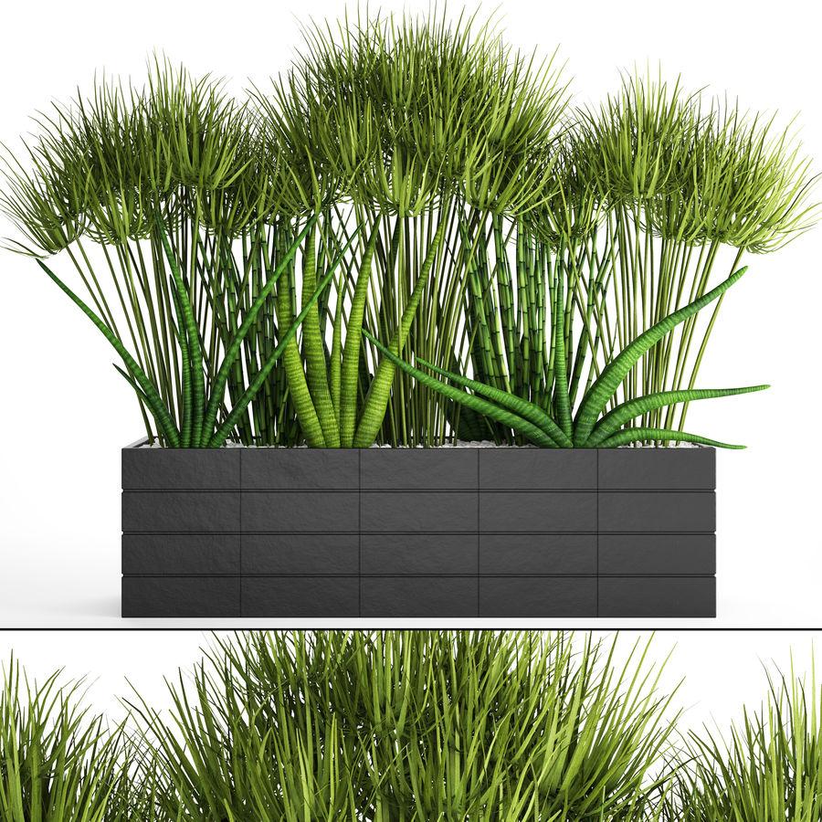 Rośliny tropikalne w doniczce royalty-free 3d model - Preview no. 1