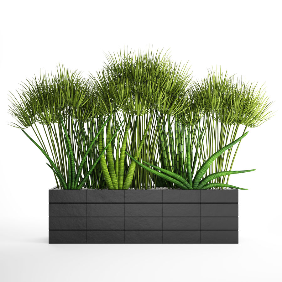 Rośliny tropikalne w doniczce royalty-free 3d model - Preview no. 3