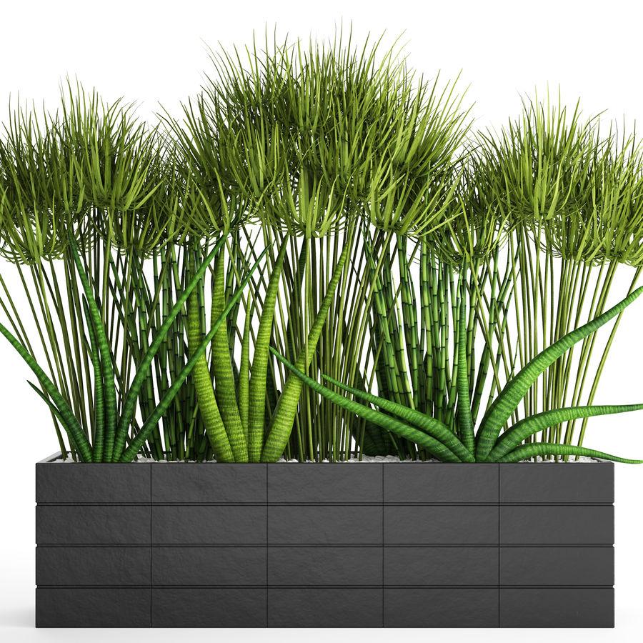 Rośliny tropikalne w doniczce royalty-free 3d model - Preview no. 4